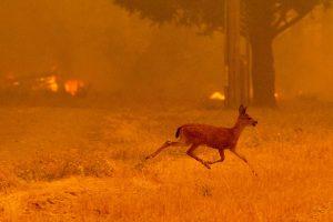 Alerta mundial, últimos 10 años los más calientes de la Tierra