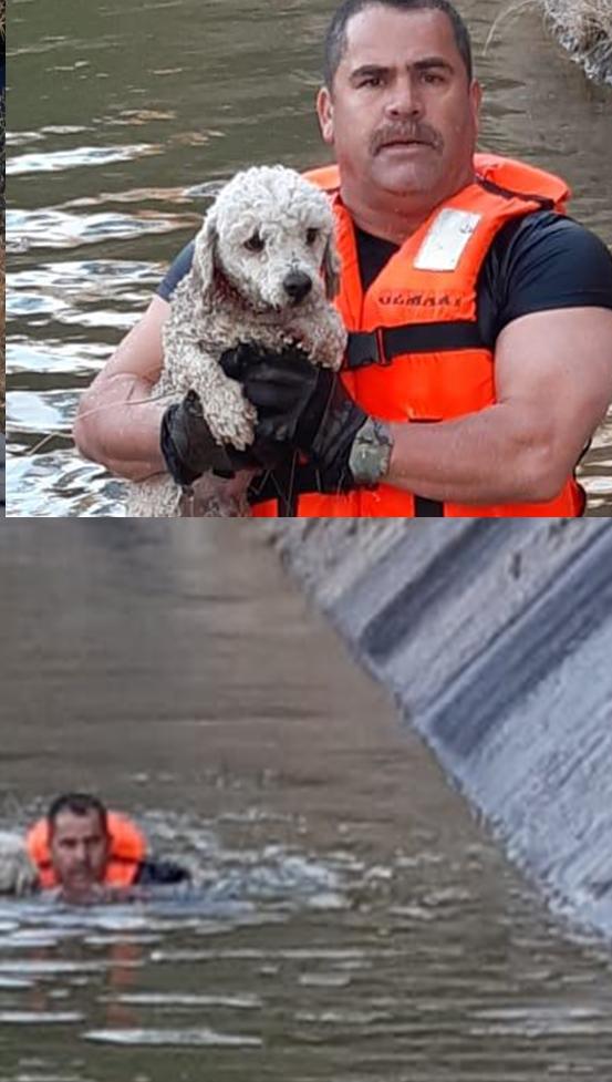 Bomberos rescatan french poodle atrapado en la presa Chihuahua