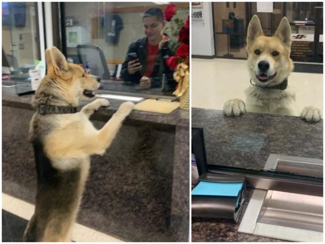Chico, el perrito que fue a la policía para reportar su extravío