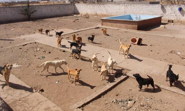 28 perros vivían en condiciones deplorables; son rescatados