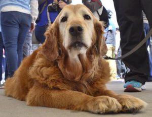 «Greta» mascota del gobernador murió anoche