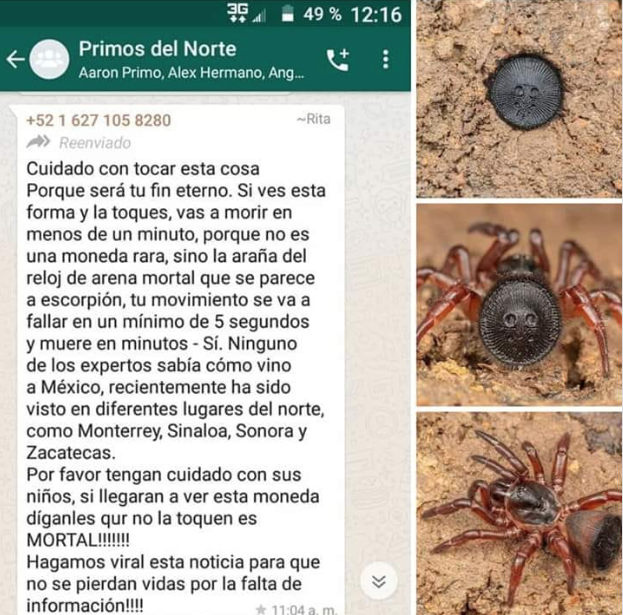 "LA FAKE NEWS EN TORNO A LA ARAÑA ""RELOJ DE ARENA"""