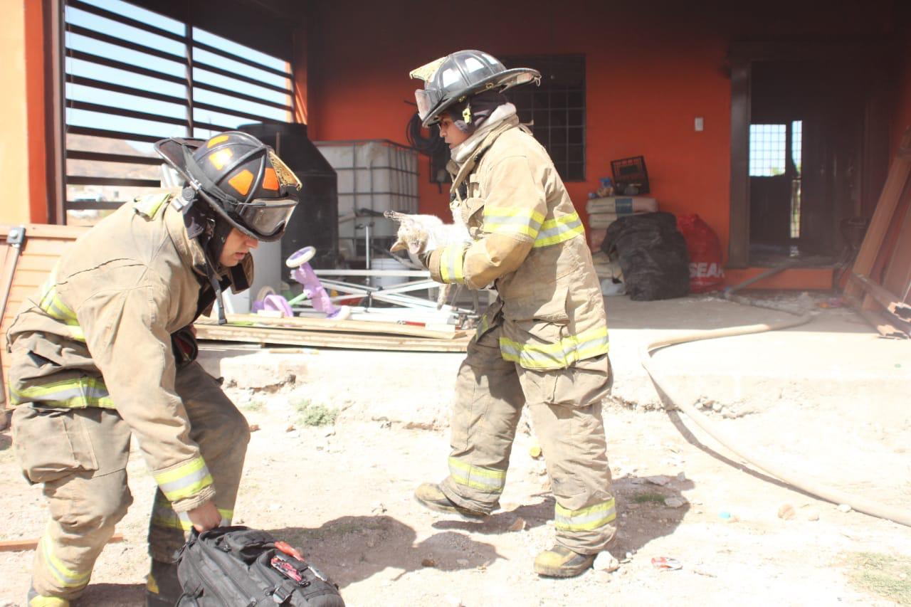 Rescatan bomberos a gata preñada de la muerte