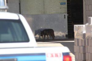 Rescatan perro que cayó aljibe en granja