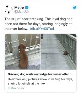 Perrito espera durante días a su amo en puente donde se suicidó