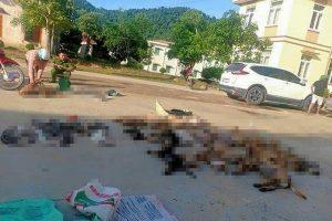 Mataban perros y gatos para vender su carne