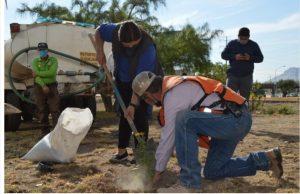 Reforesta Gobierno Municipal y Regidores área verde de avenida La Cantera