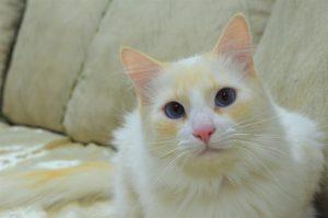 Tips y consejos para gatos viejitos hoy en su día