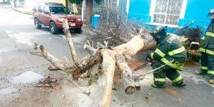 Varios árboles caídos e inundaciones dejaron lluvias de ayer