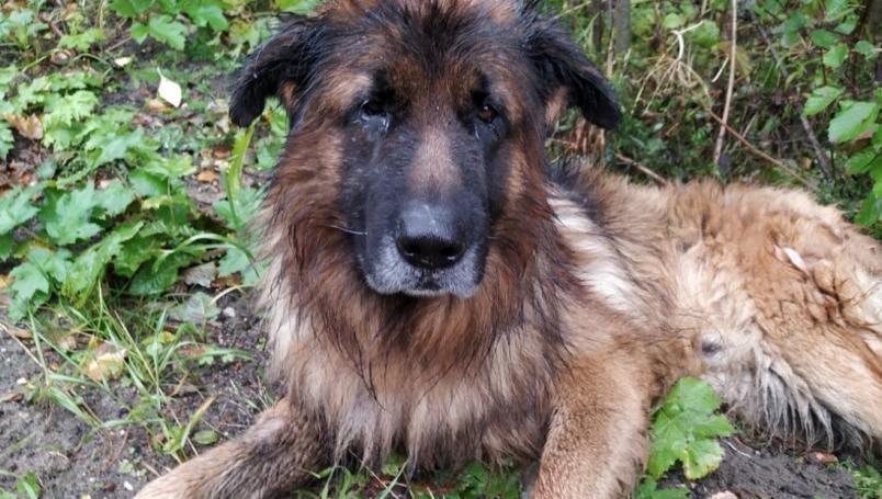 Perro sobrevive a inyección letal, sale de la tumba y va a buscar a su familia