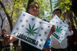 Llega a Cámara de Diputados Ley para regular la mariguana, turnan a comisiones