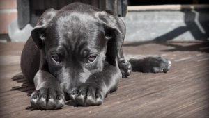 Perro mata a bebé en Rancho Anapra