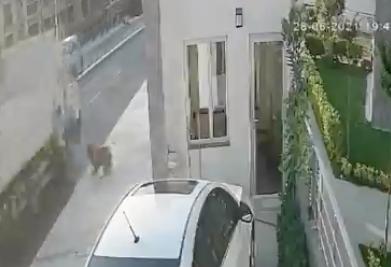 Perro callejero asusta a peatón que casi muere atropellado